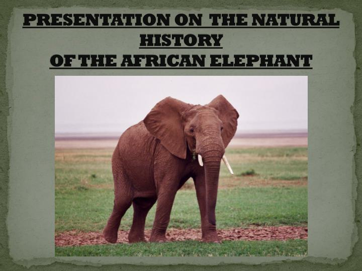 presentation on the natural history of the african elephant n.