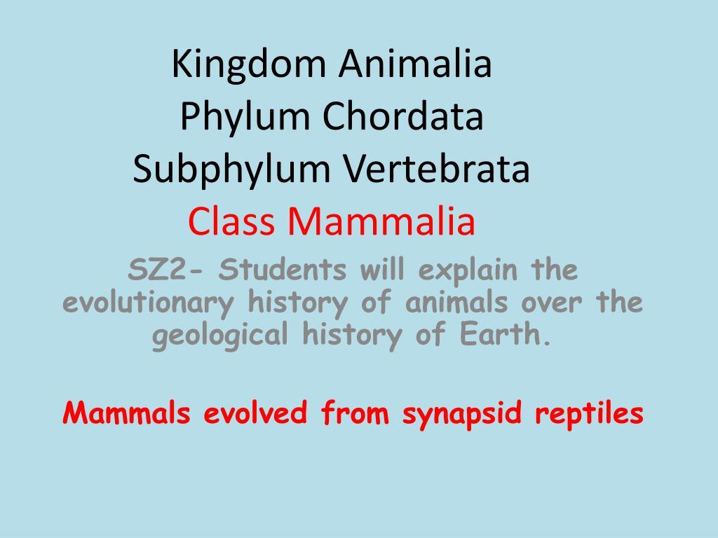 subphylum