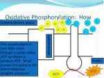 oxidative phosphorylation how2