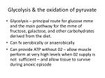 glycolysis the oxidation of pyruvate