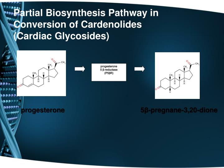Partial Biosynthesis Pathway in Conversion of