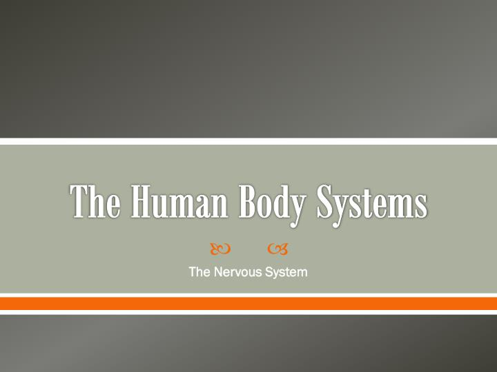 the human body systems n.