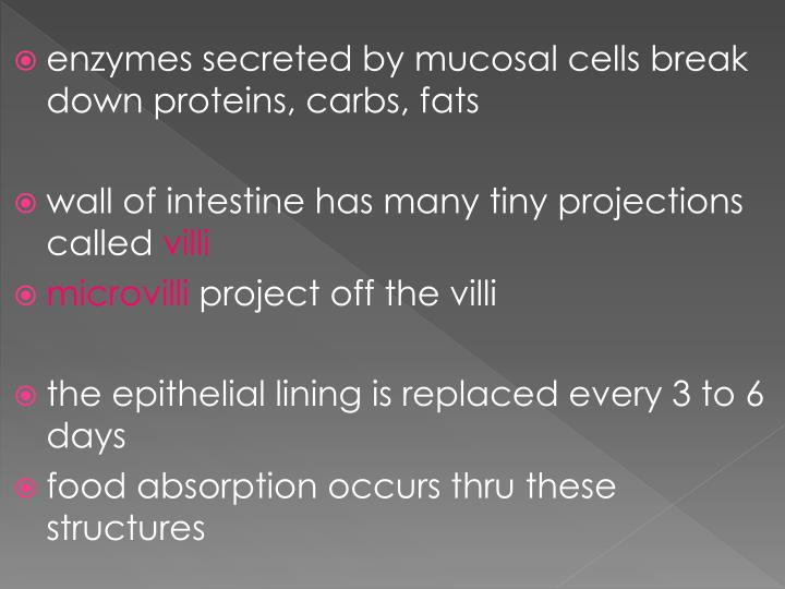 enzymes secreted by mucosal cells break down proteins,