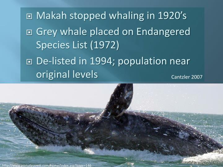 Makah stopped whaling in 1920's