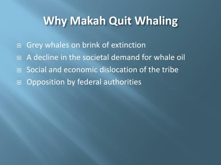 Why Makah Quit Whaling