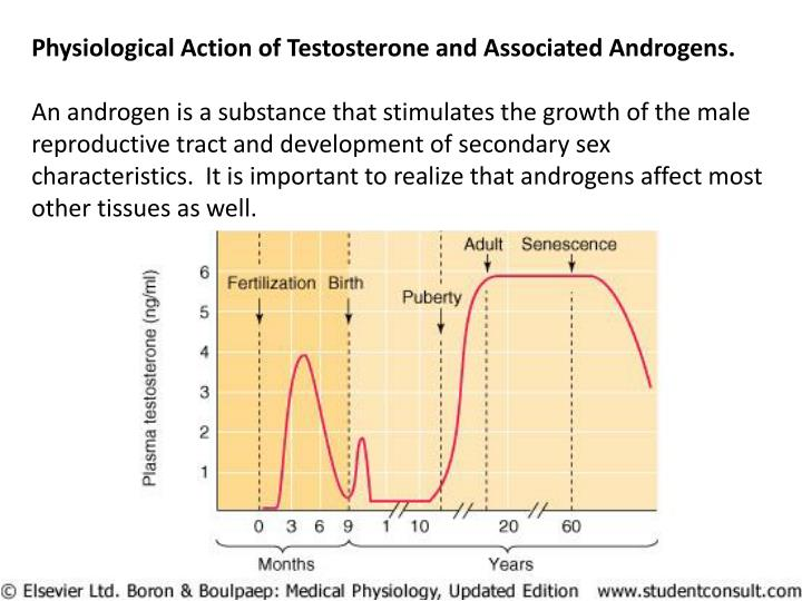Physiological Action of Testosterone and Associated Androgens.