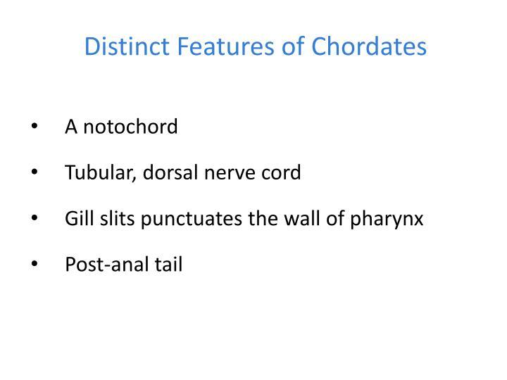 Distinct features of chordates