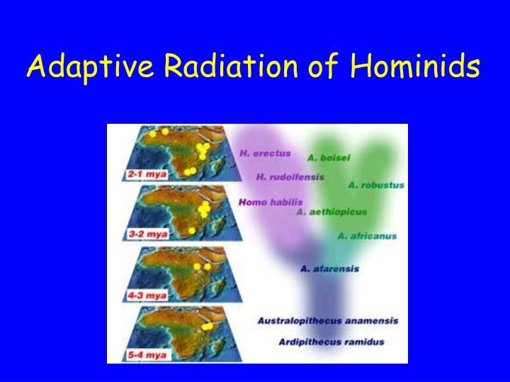 Adaptive Radiation of Hominids