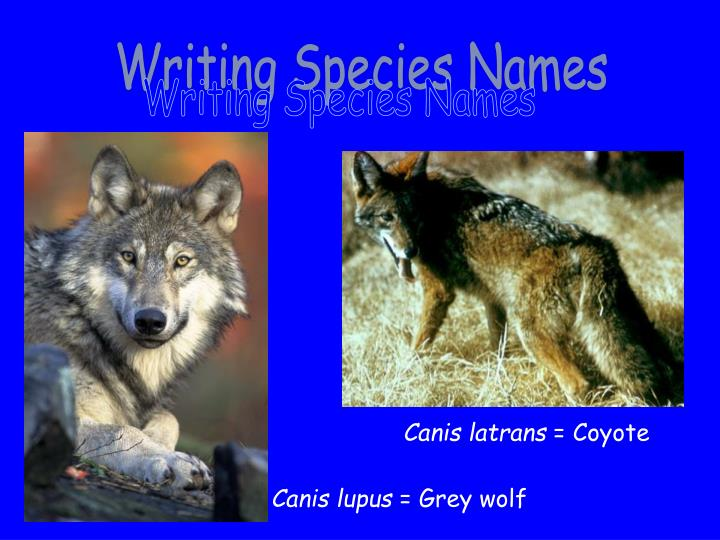 Writing Species Names