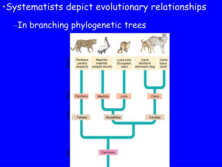 Systematists depict evolutionary relationships