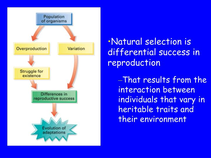 Natural selection is differential success in reproduction