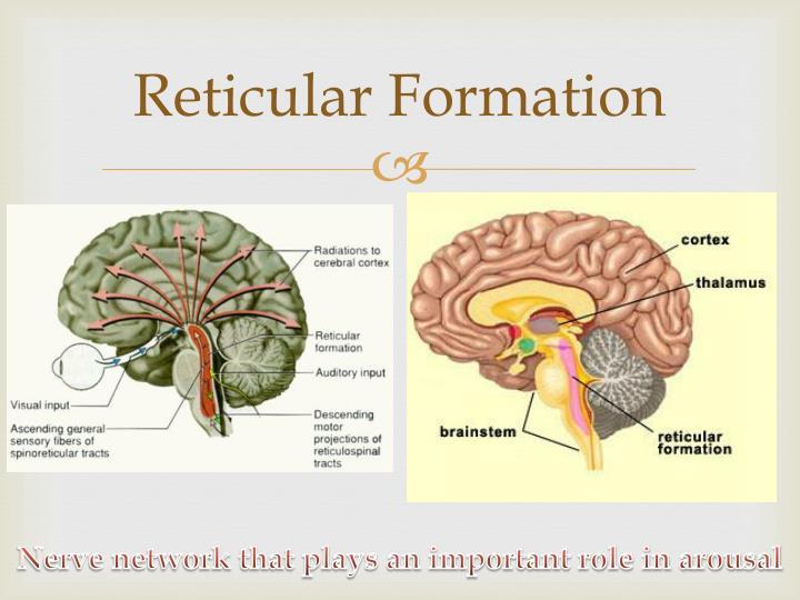 define reticular formation Define reticular reticular synonyms, reticular pronunciation, reticular translation, english dictionary definition of reticular adj 1 resembling a net in form.