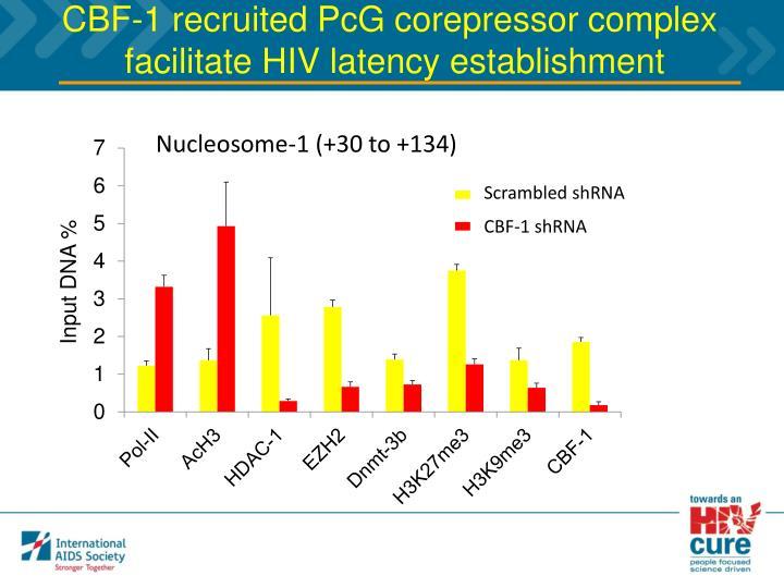 CBF-1 recruited PcG corepressor complex