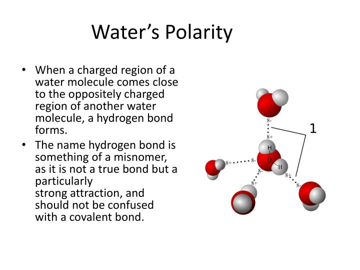 Water's Polarity
