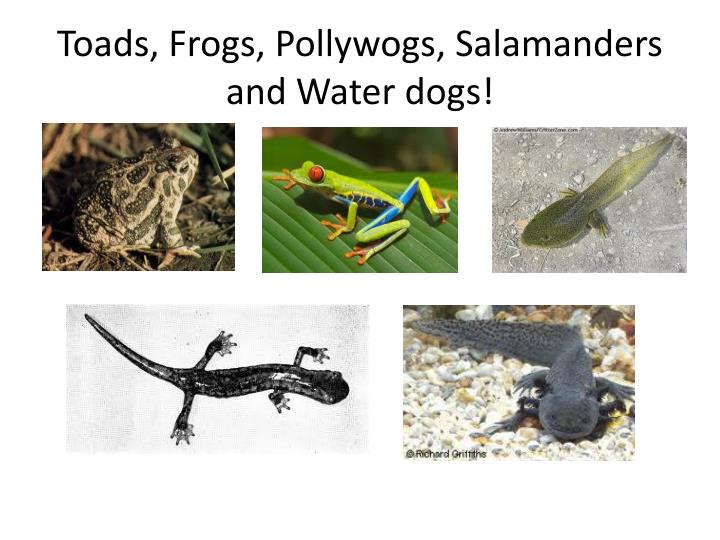 Toads, Frogs, Pollywogs, Salamanders and Water dogs!
