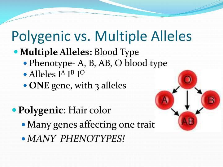 define multiple allele trait