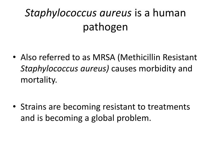 Staphylococcus aureus is a human pathogen
