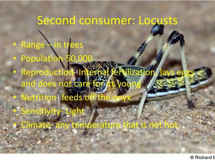 Second consumer: Locusts