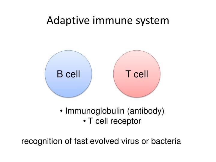 Adaptive immune system