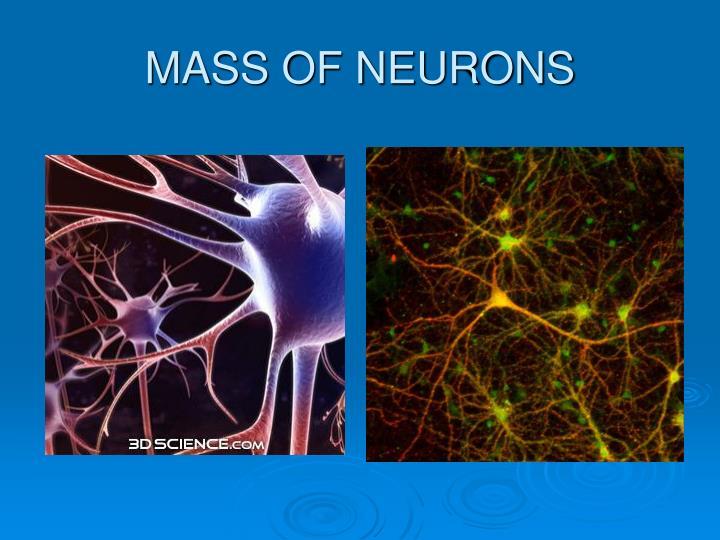 MASS OF NEURONS