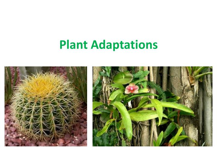 plant adaptation Plant and animal adaptation showing top 8 worksheets in the category - plant and animal adaptation some of the worksheets displayed are haleakal national park what is my adaptation, have you ever wondered about the science all around us plants, plant adaptations, how plants and animals survive adapt to their environment, what are adaptations, lesson 7 plant adaptations, animal adaptations.