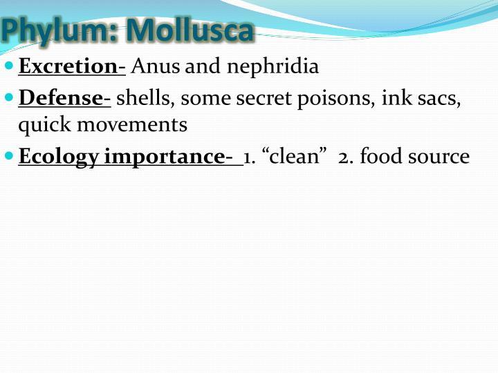 Phylum: Mollusca