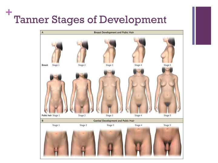 Matchless puberty development of the penis amusing