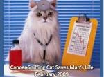 cancer sniffing cat saves man s life february 2009