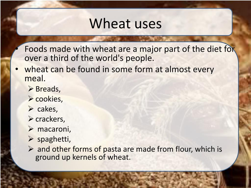 PPT - Production technology of wheat PowerPoint Presentation - ID
