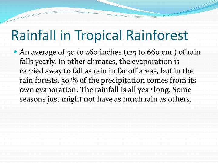 Rainfall in tropical rainforest