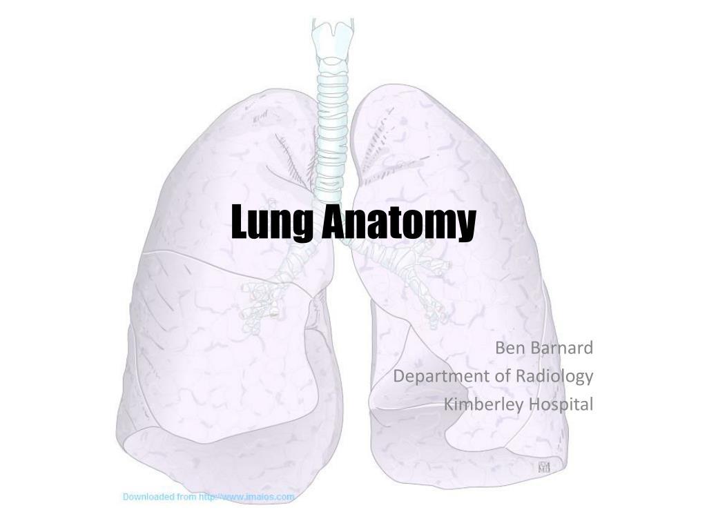 Ppt Lung Anatomy Powerpoint Presentation Id1921812