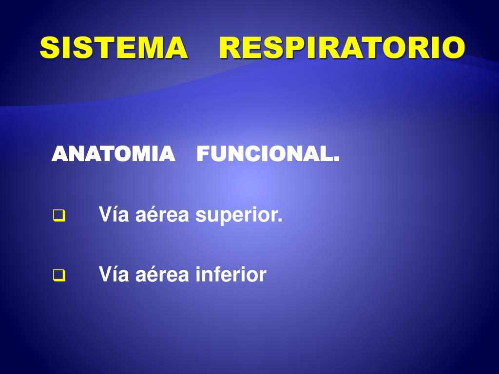 PPT - SISTEMA RESPIRATORIO PowerPoint Presentation - ID:1921841