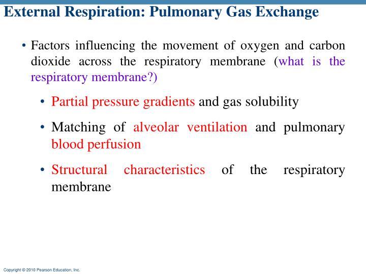 External Respiration: Pulmonary Gas Exchange