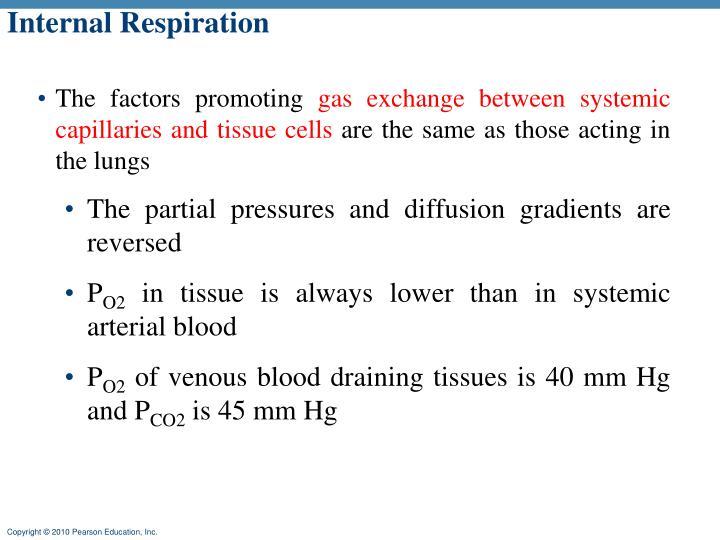 Internal Respiration