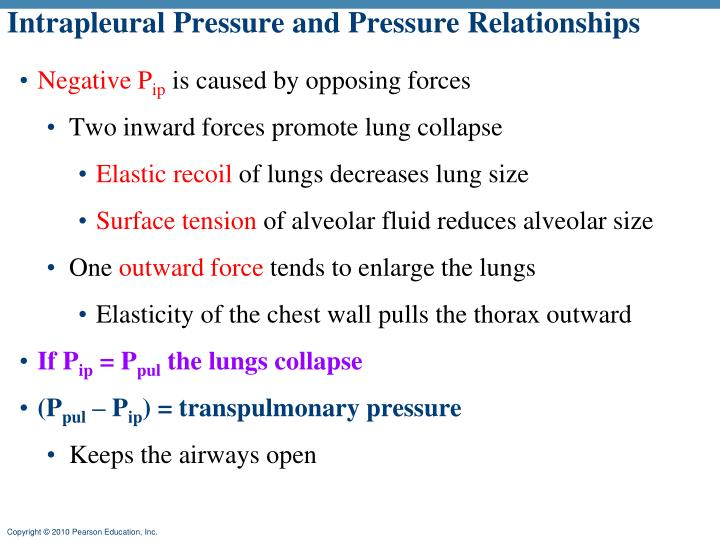 Intrapleural Pressure and Pressure Relationships
