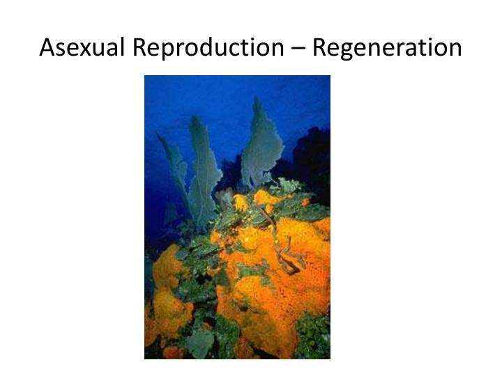 Asexual Reproduction – Regeneration