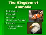 the kingdom of animalia