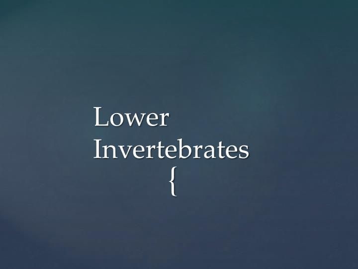 Lower Invertebrates