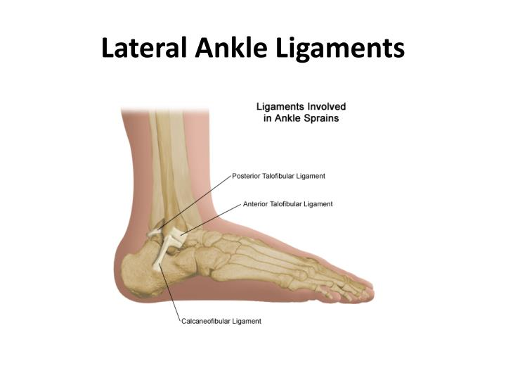 Ppt Lateral Ankle Ligaments Powerpoint Presentation Id1924069