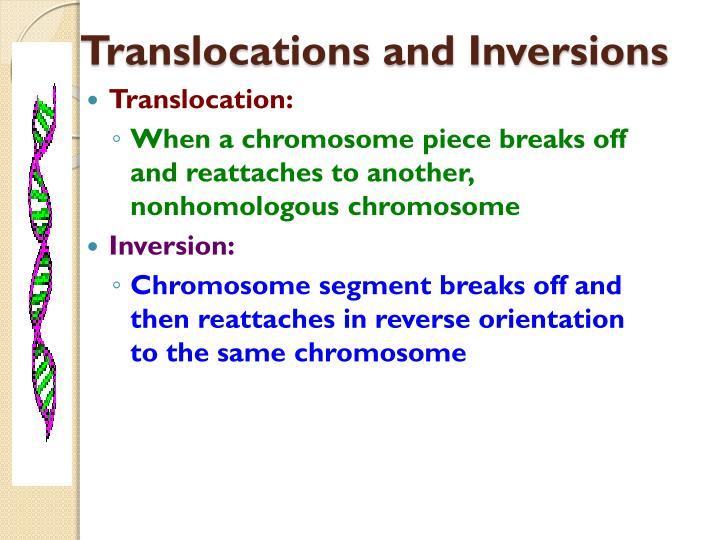 Translocations and Inversions