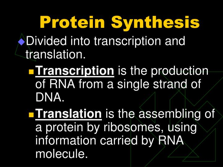 5 4 1 synthesis of a protein In the first of the two stages of making protein from dna, a gene on the dna molecule is transcribed into a complementary mrna molecule remember that many of a cell's ribosomes are found associated with the rough er, and carry out the synthesis of proteins destined for the golgi.