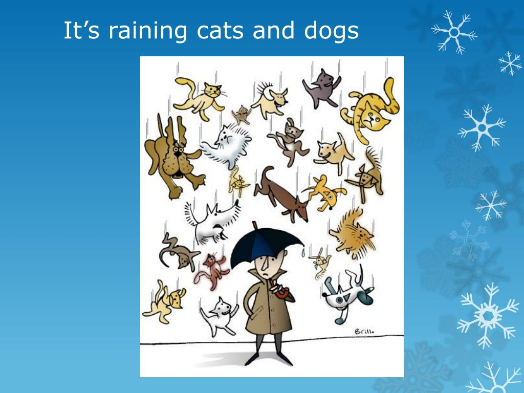 Ppt Cats And Dogs Idioms In English Powerpoint Presentation Id 1924829