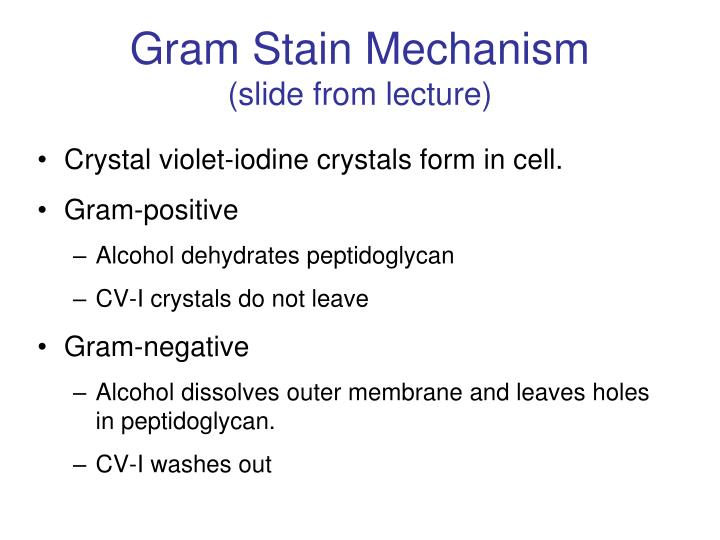 Gram Stain Mechanism