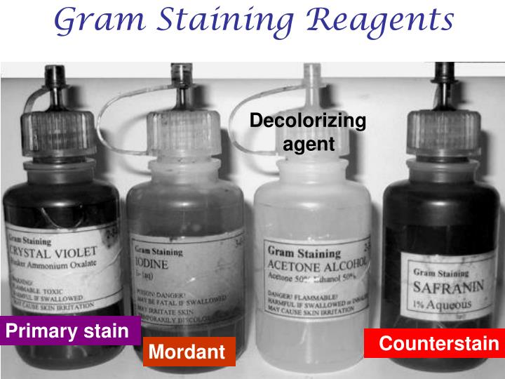 Gram Staining Reagents