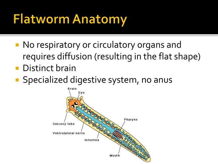 Ppt Worms Powerpoint Presentation Id1925973