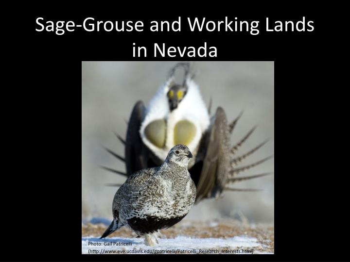 sage grouse and working lands in nevada n.