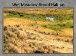 wet meadow brood habitat