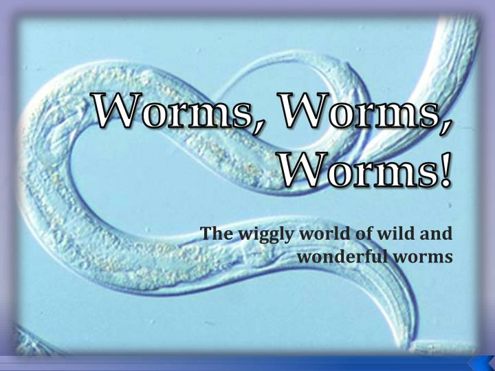 worms worms worms n.