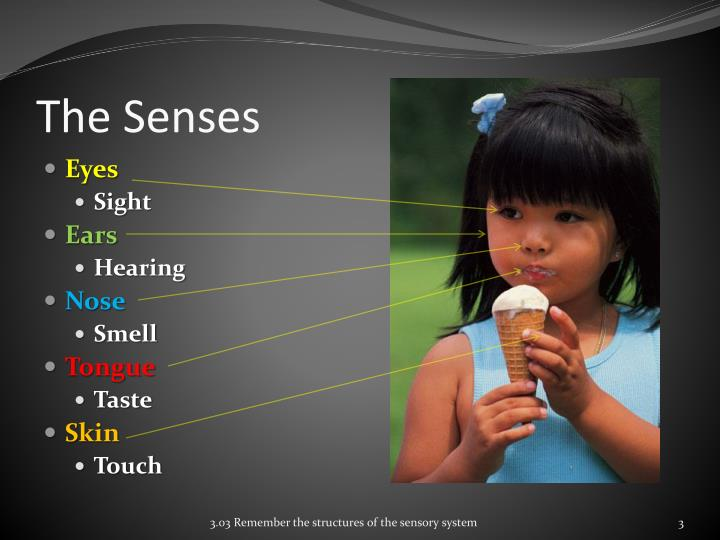 sensory details on sight sound smell taste touch Label each detail: sight, hearing, smell, taste, or touch then, list as many new sensory details as you can, using as many of the senses as possible try to make each new detail as vivid as the best details shared in your group.