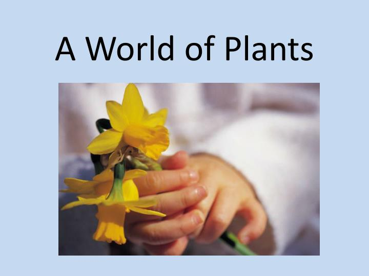a world of plants n.